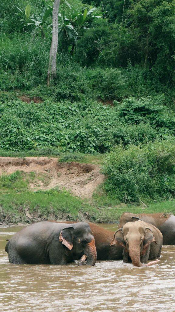 elephant sanctuary river