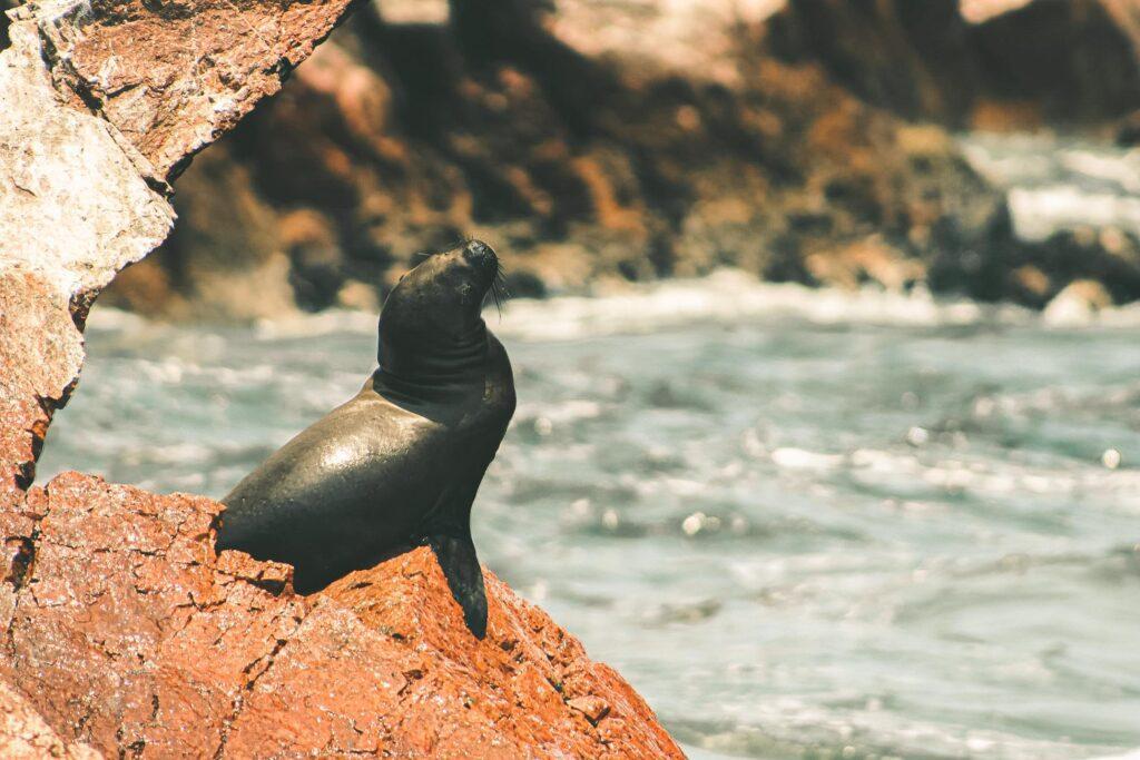 paracas wild life